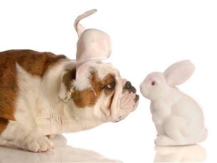 Páscoa: Não dê chocolate aos pets! Dê à Veterinaria!