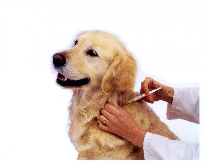 Vacina Anti - Rábica