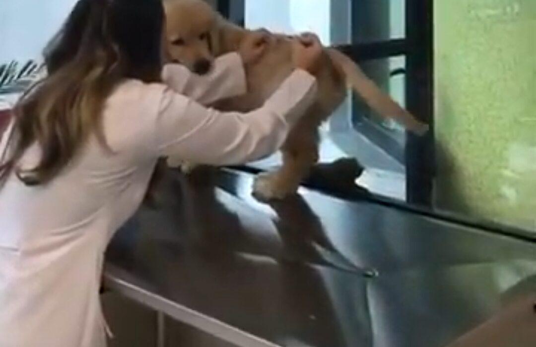 Vacine seu Pet